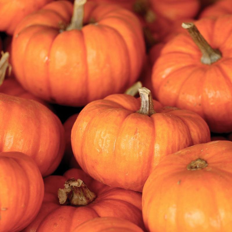 秋の旬の食材一覧(秋の野菜、きのこなど)まとめ